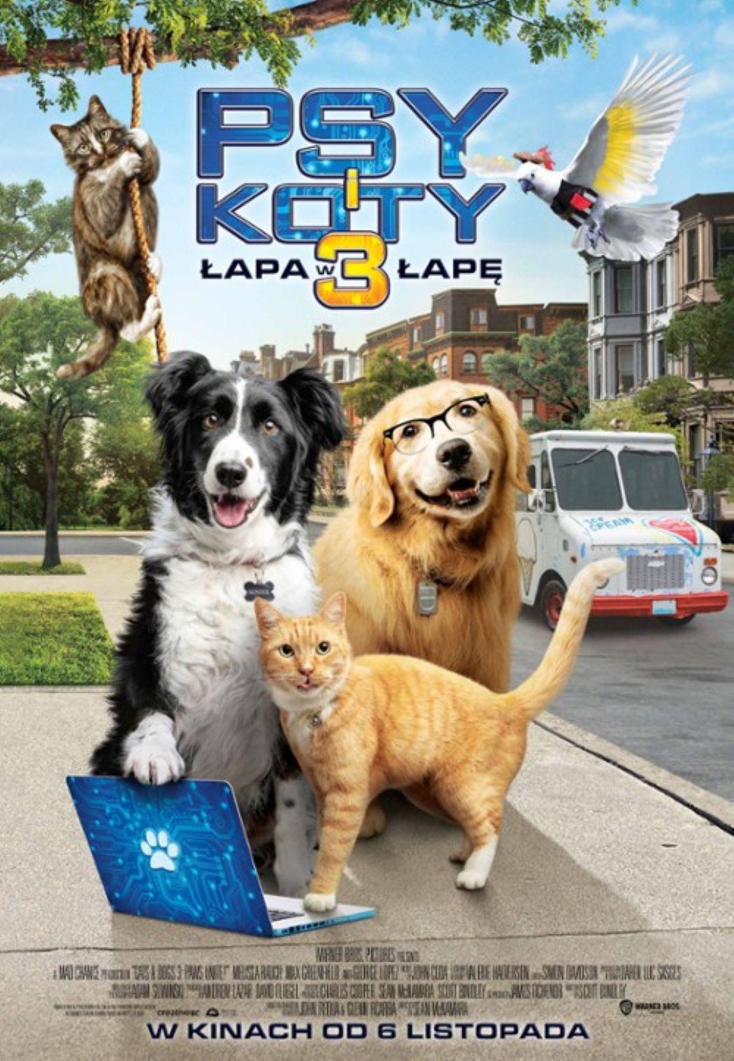 psy i koty 33